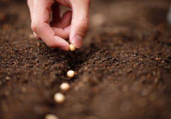March 6-12, Fantastic Fungi Screening at AFI Silver Spring